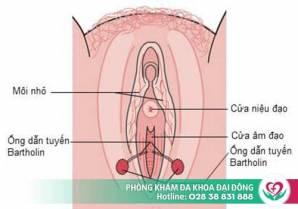 Triệu chứng nhận biết viêm tuyến Bartholin